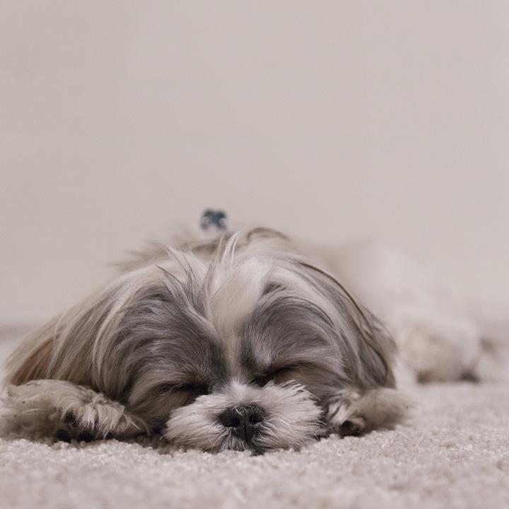 肥満型男性の睡眠時無呼吸症候群